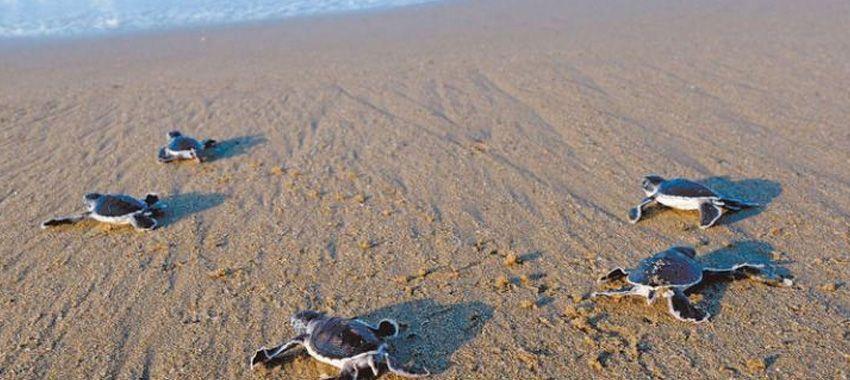 los-mejores-lugares-avistar-tortugas-marinas