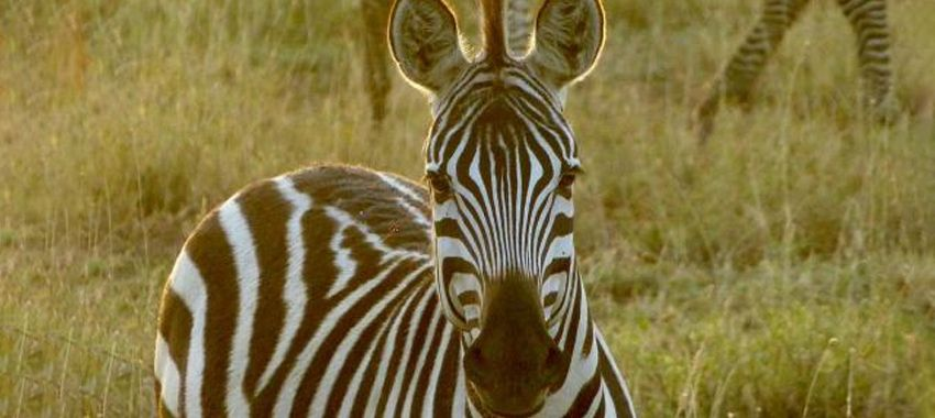 safari-tanzania-consejos-presupuesto
