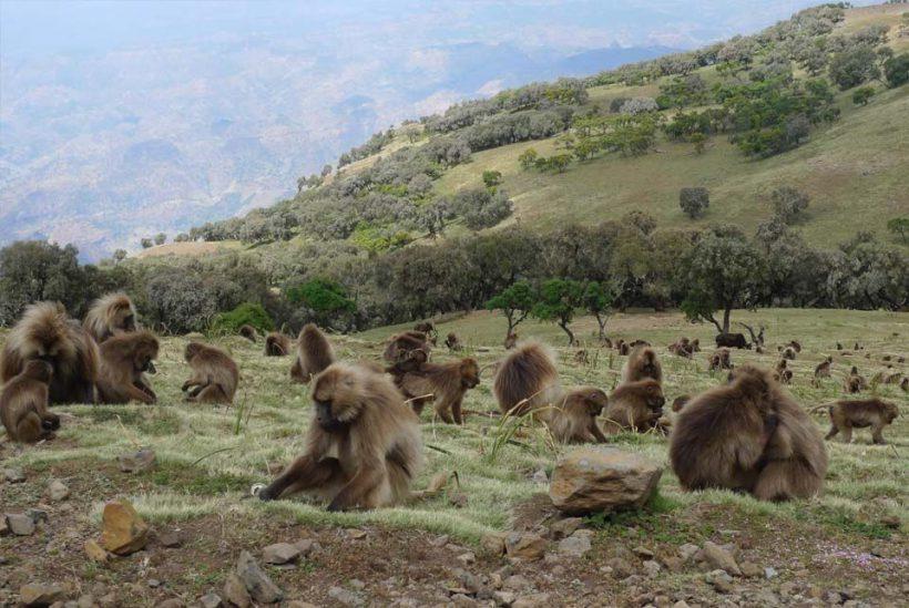 Montañas Simien, Etiopía2