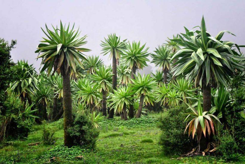 Montañas Simien, Etiopía5