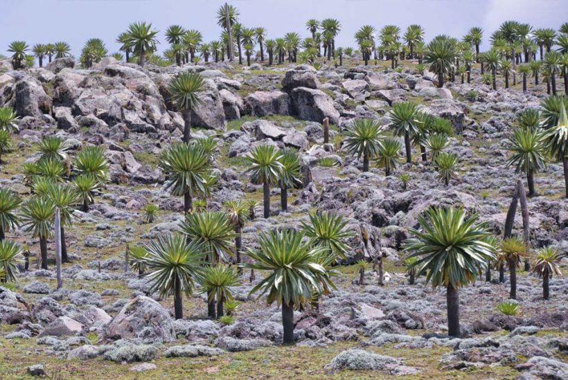 Montañas Simien, Etiopía6