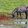 Viaje de safari a África