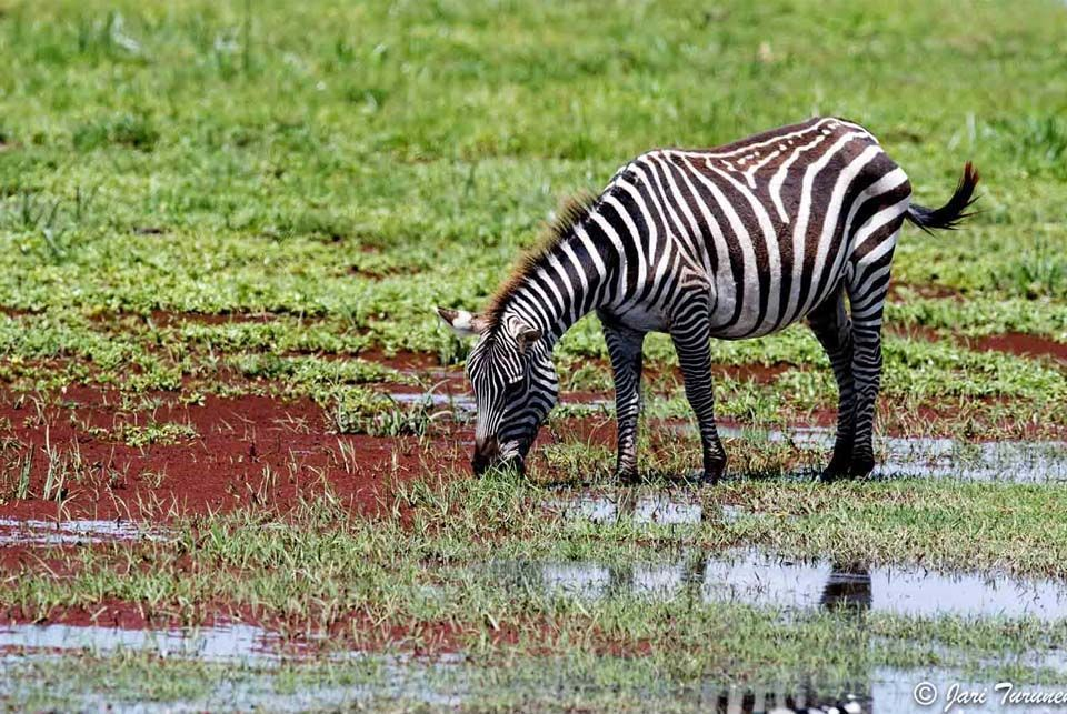 Atardecer africano, Kenia2