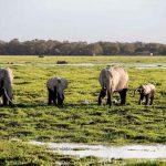 Atardecer africano, Kenia7