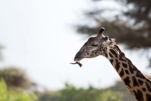 Atardecer africano, Kenia8