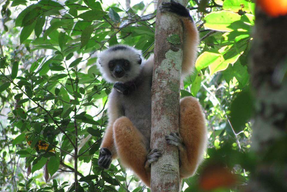 Los Indri y ballenas, Madagascar4