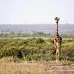 Senderos salvajes, Kenia6