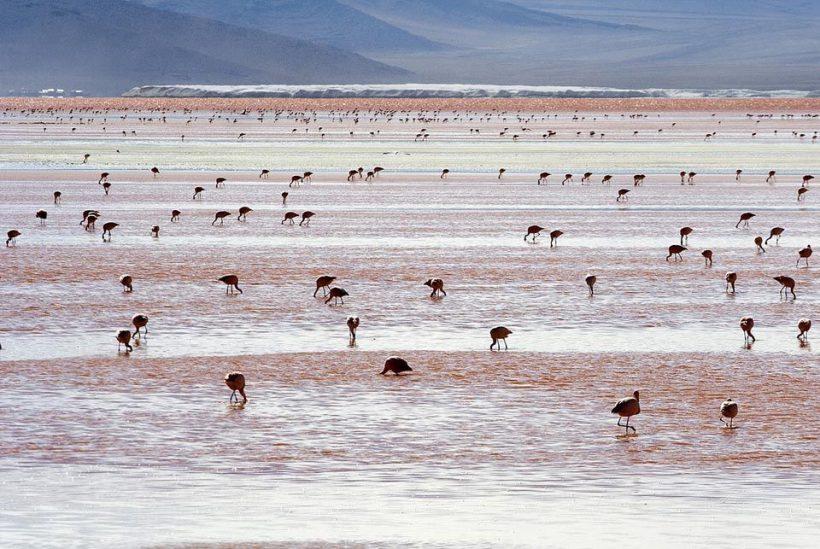 54Salar de Uyuni, Bolivia1