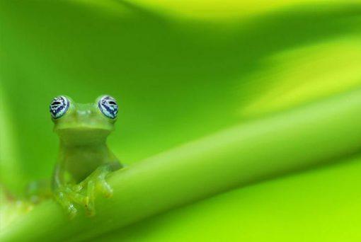 Costa Rica a tu Aire2