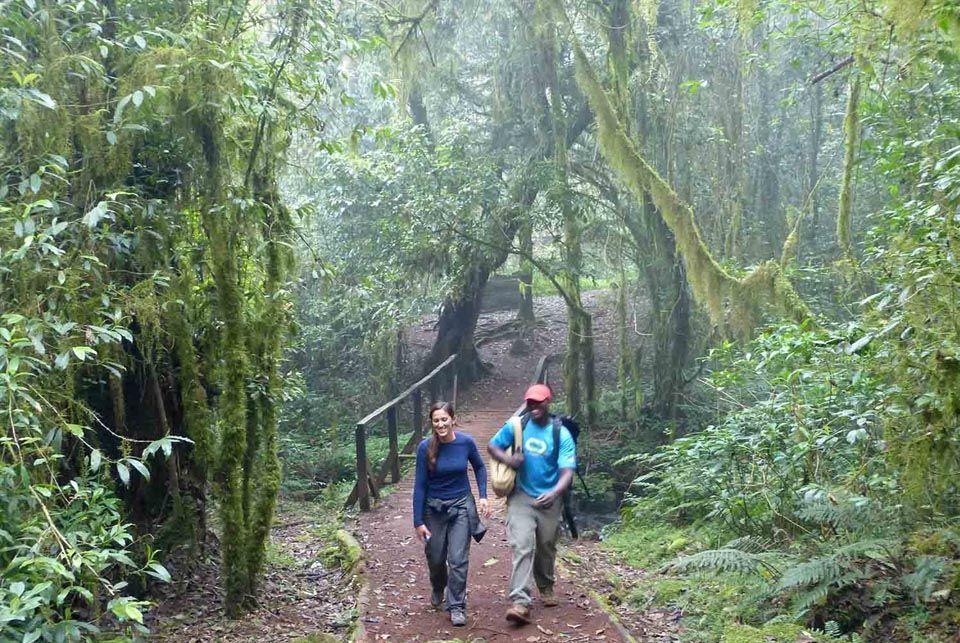 Kilimanjaro – Ruta Machame3