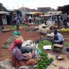 Miradas de Gorilas, Uganda5