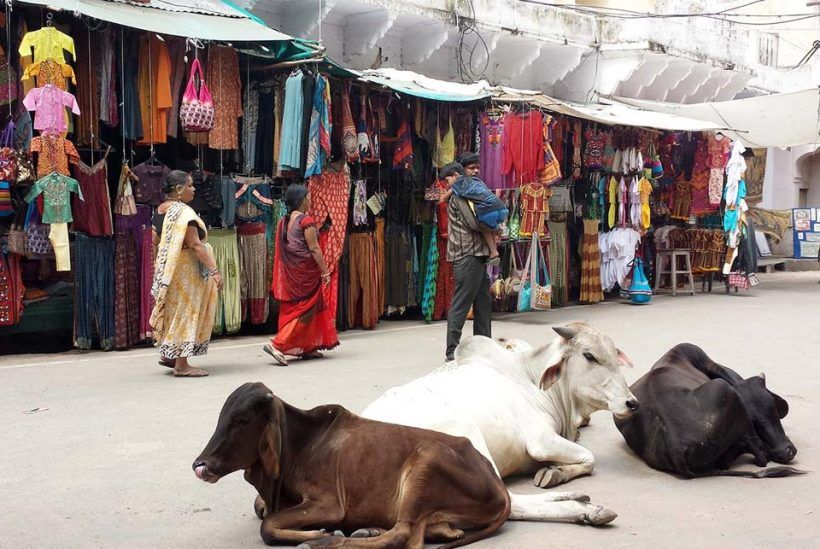 Rajastán y Varanasi, India6