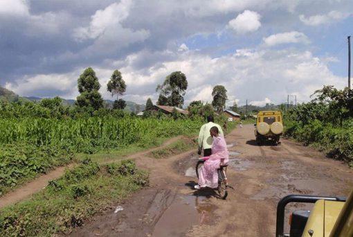 Selva Bwindi, Uganda3