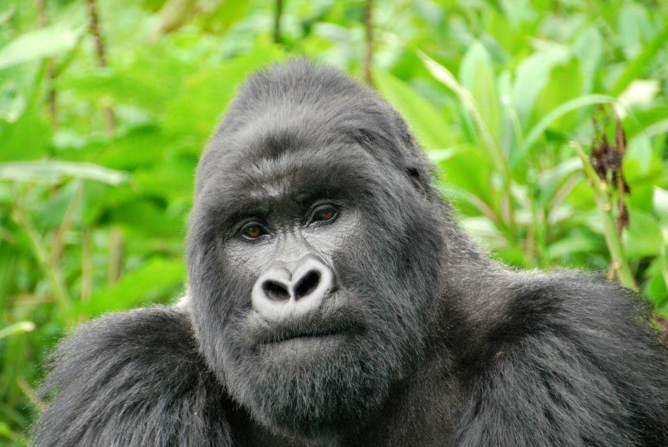 Selva Bwindi, Uganda5