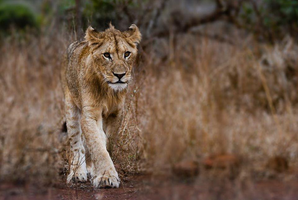Selva Bwindi, Uganda7