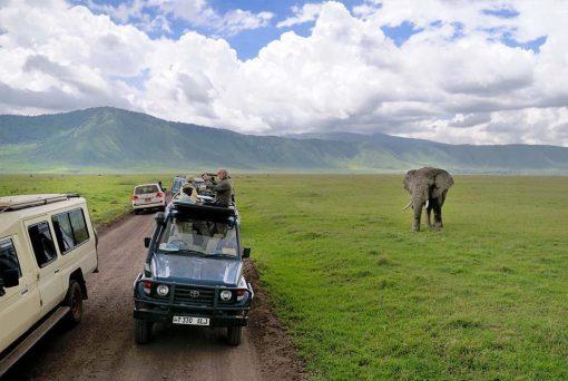 Valle Luangwa, Zambia1