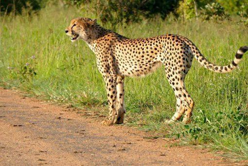 Valle Luangwa, Zambia5
