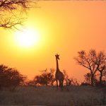 Valle Luangwa, Zambia6