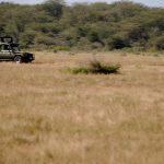 Valle Luangwa, Zambia8