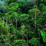 Viaje a Costa Rica2