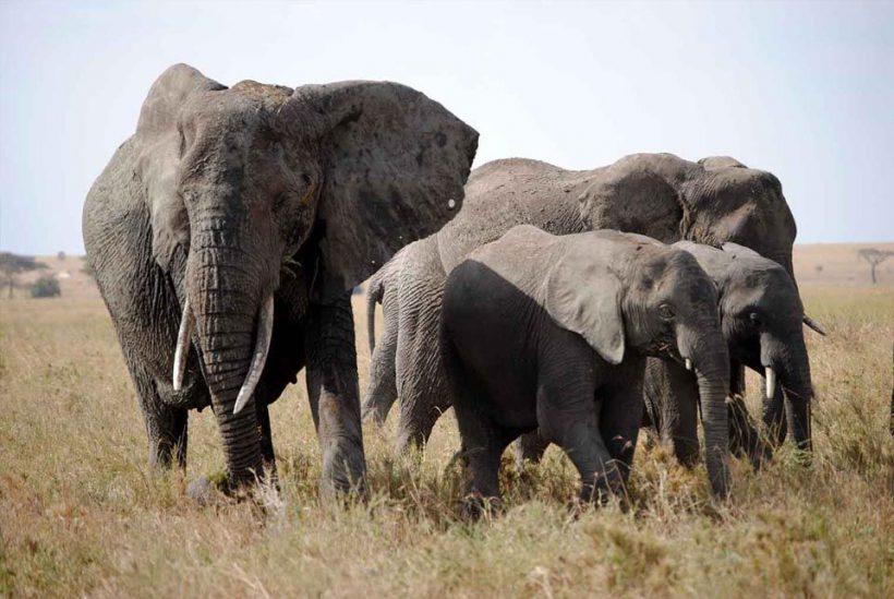 Rincones Perdidos, Tanzania5