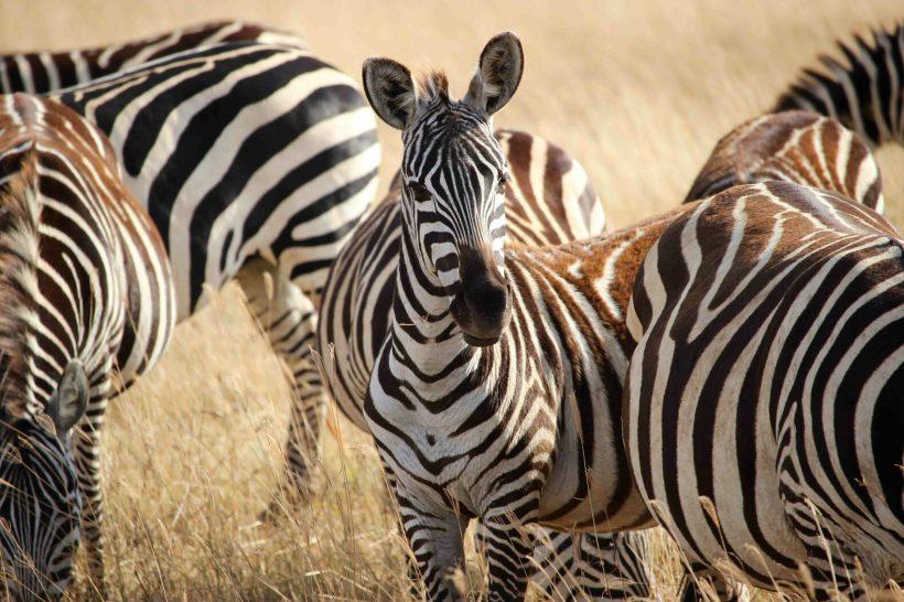 Horizonte Paralelo Tanzania 10