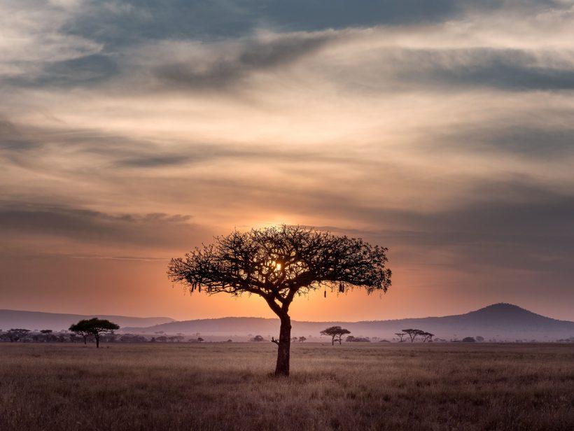 Horizonte Paralelo Tanzania 11