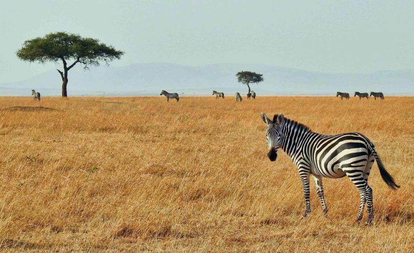 Horizonte Paralelo Tanzania 5