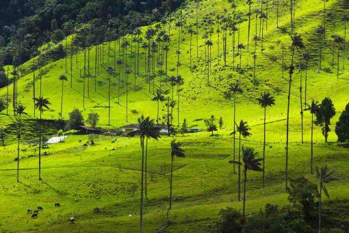 Horizonte Paralelo Colombia