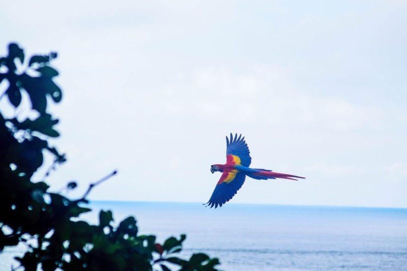Horizonte Paralelo Costa Rica 10