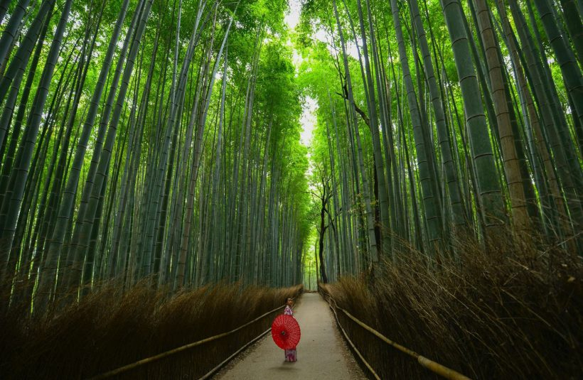 Horizonte Paralelo Japon 14