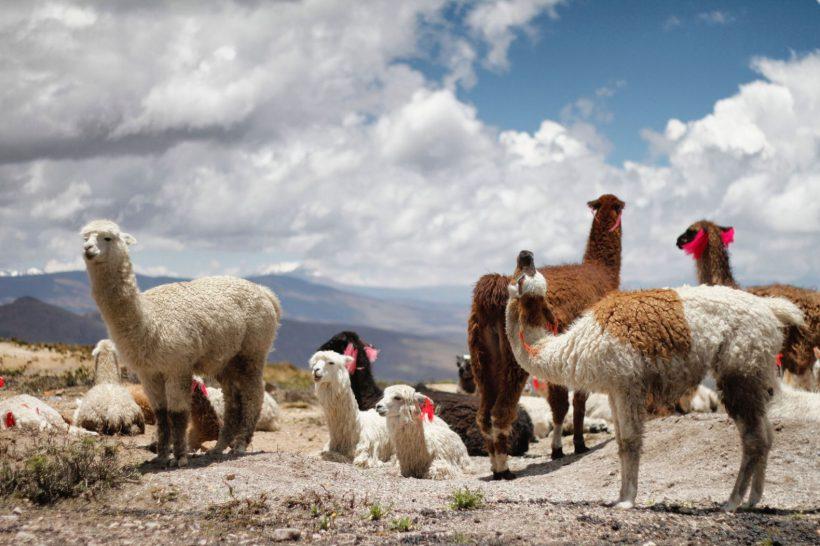 Horizonte Paralelo Peru 28