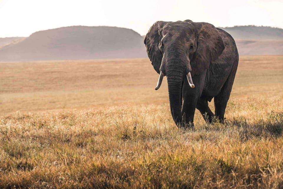 viaje-tanzania