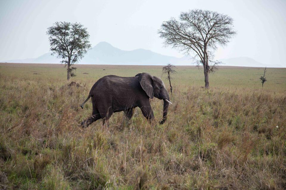 Viaje a Uganda